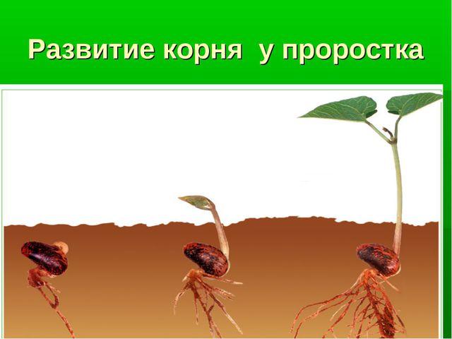 Развитие корня у проростка