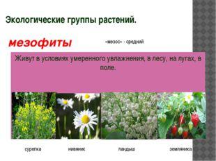 Экологические группы растений. Живут в условиях умеренного увлажнения, в лесу