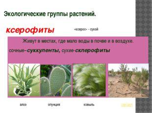 Экологические группы растений. Живут в местах, где мало воды в почве и в возд