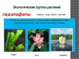 Экологические группы растений. Полностью погружены в воду, стебли не имеют ме