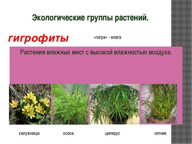Экологические группы растений. Растения влажных мест с высокой влажностью воз...