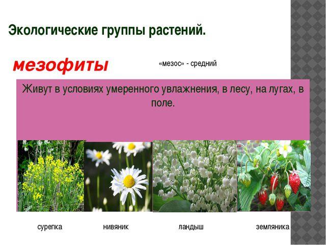 Экологические группы растений. Живут в условиях умеренного увлажнения, в лесу...