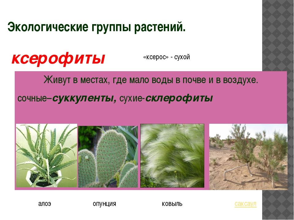 Экологические группы растений. Живут в местах, где мало воды в почве и в возд...