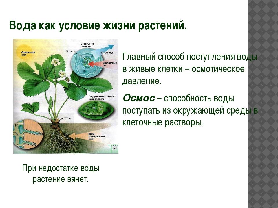 Вода как условие жизни растений. Главный способ поступления воды в живые кле...