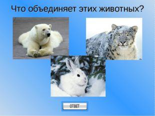 Что объединяет этих животных?