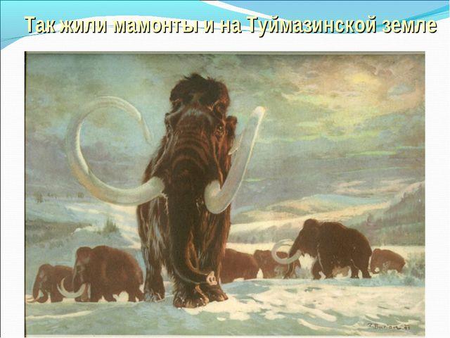 Так жили мамонты и на Туймазинской земле