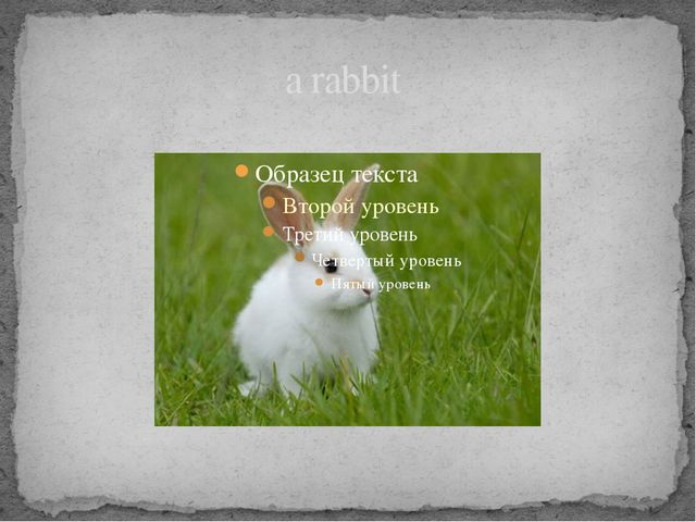 a rabbit