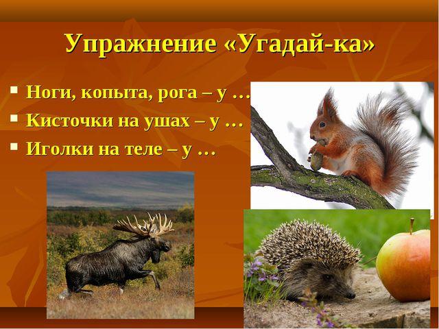 Упражнение «Угадай-ка» Ноги, копыта, рога – у … Кисточки на ушах – у … Иголки...