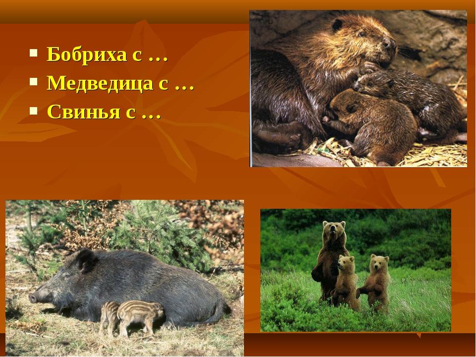 Бобриха с … Медведица с … Свинья с …