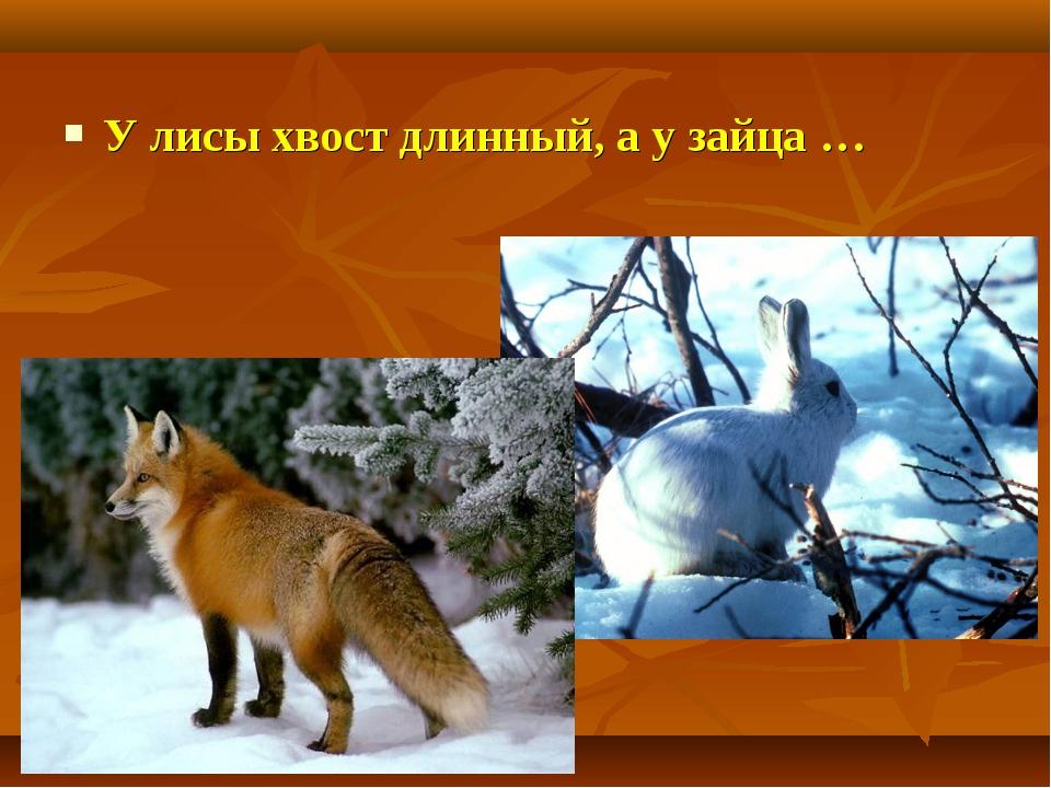 У лисы хвост длинный, а у зайца …