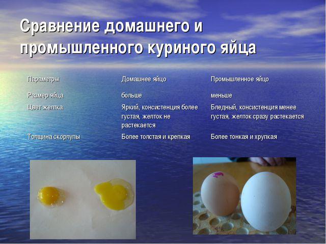Сравнение домашнего и промышленного куриного яйца ПараметрыДомашнее яйцоПро...