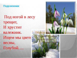 Подснежник Под ногой в лесу трещит, И хрустит валежник. Ищем мы цветок весны,