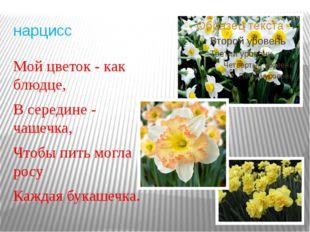 нарцисс Мой цветок - как блюдце, В середине - чашечка, Чтобы пить могла росу