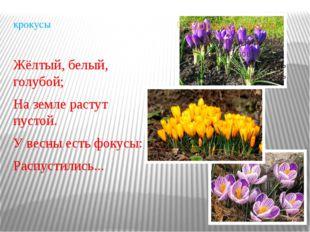 крокусы Жёлтый, белый, голубой; На земле растут пустой. У весны есть фокусы: