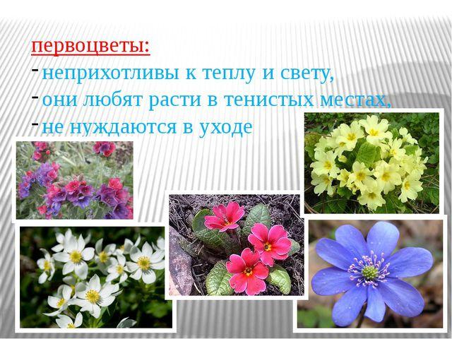 первоцветы: неприхотливы к теплу и свету, они любят расти в тенистых местах,...