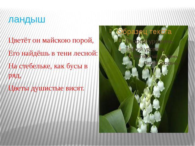 ландыш Цветёт он майскою порой, Его найдёшь в тени лесной: На стебельке, как...