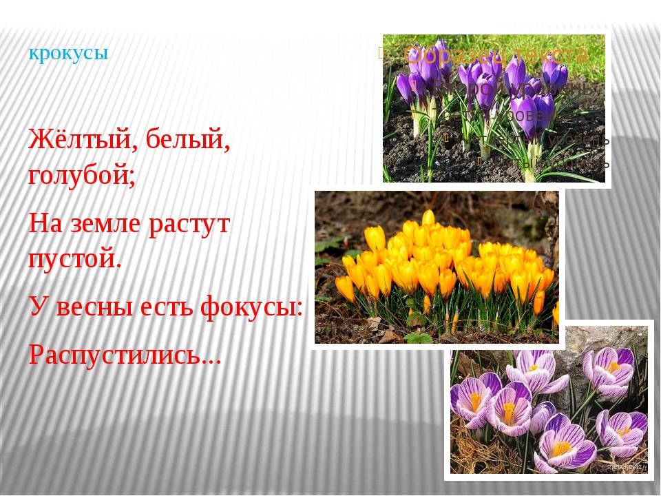 крокусы Жёлтый, белый, голубой; На земле растут пустой. У весны есть фокусы:...