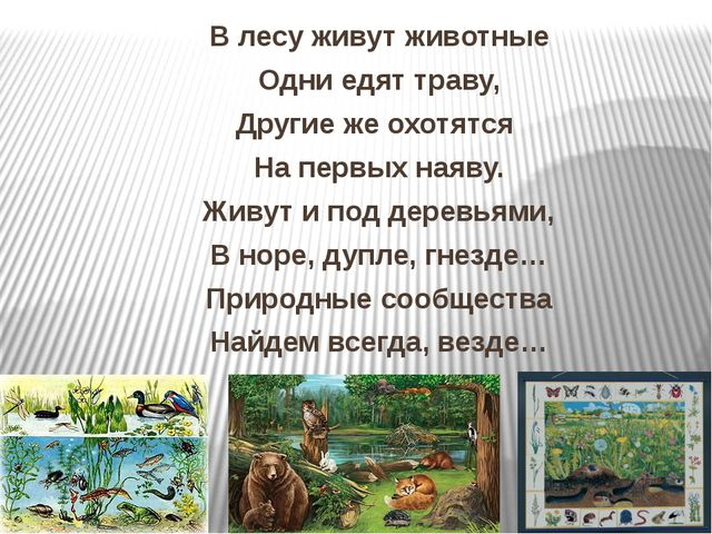 В лесу живут животные Одни едят траву, Другие же охотятся На первых наяву. Жи...