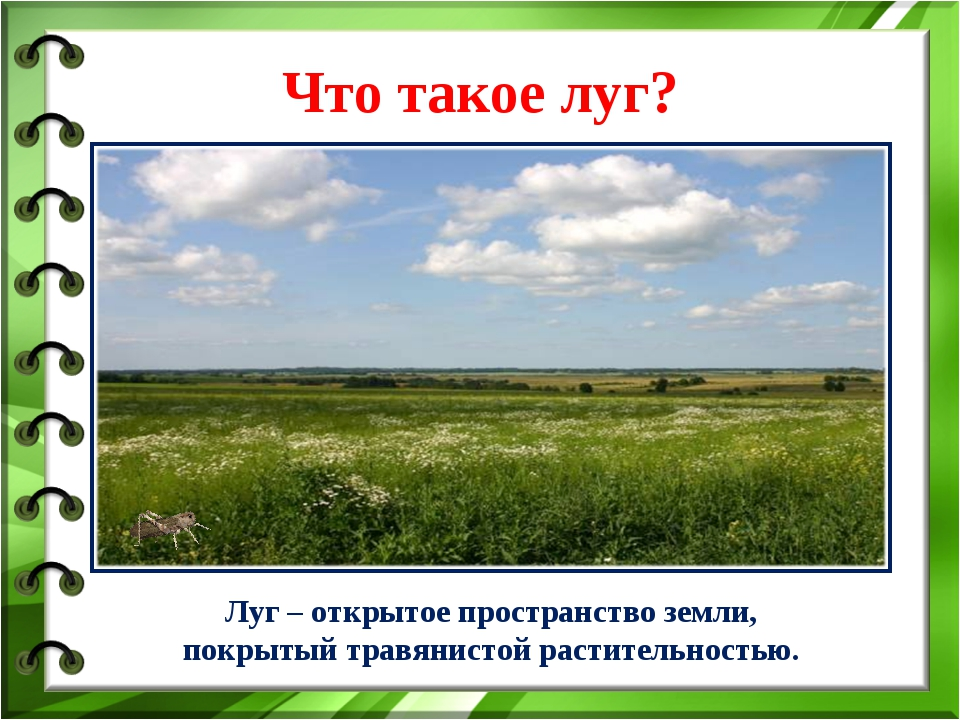 Что такое луг? Луг – открытое пространство земли, покрытый травянистой растит...
