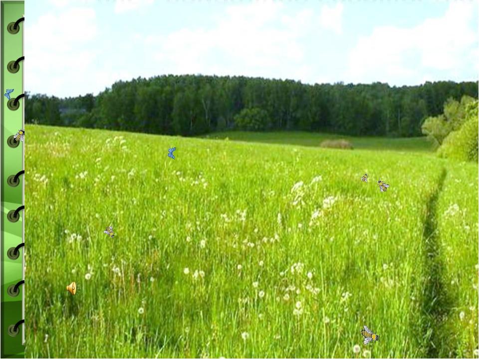 рецептов природные сообщества фото принципе экологичности