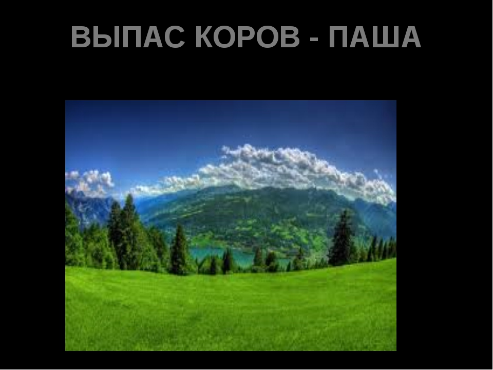 ВЫПАС КОРОВ - ПАША