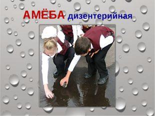 АМЁБА дизентерийная