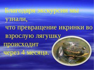 Благодаря экскурсии мы узнали, что превращение икринки во взрослую лягушку п
