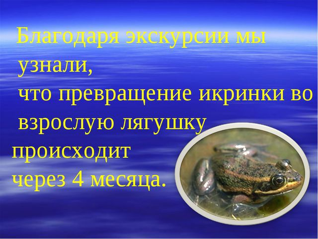 Благодаря экскурсии мы узнали, что превращение икринки во взрослую лягушку п...