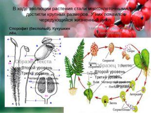 В ходе эволюции растения стали многоклеточными, они достигли крупных размеров