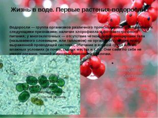 Жизнь в воде. Первые растения-водоросли. Водоросли— группа организмов различ