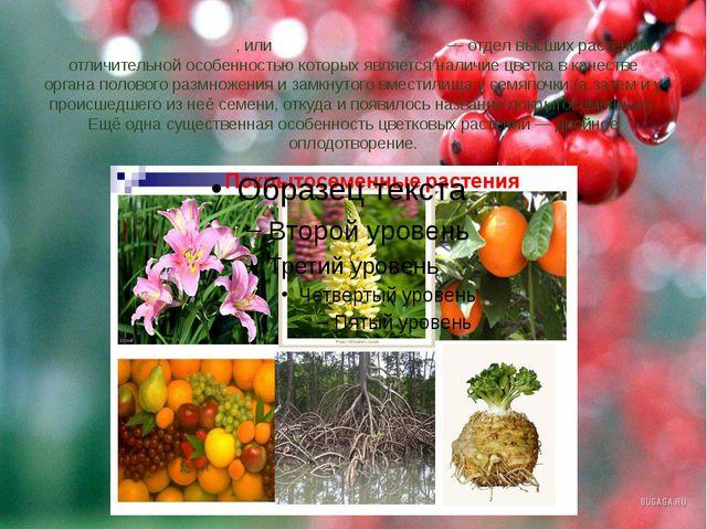 Цветко́вые расте́ния, илиПокры́тосеменны́е—отделвысших растений, отличите...