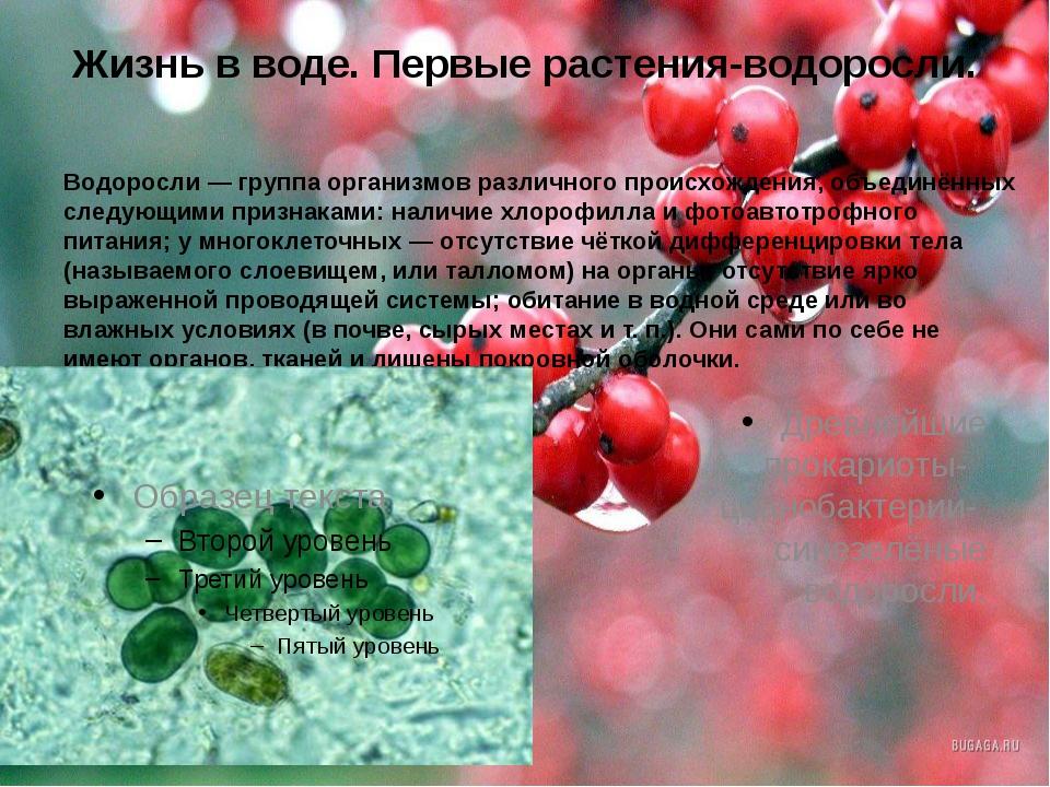 Жизнь в воде. Первые растения-водоросли. Водоросли— группа организмов различ...