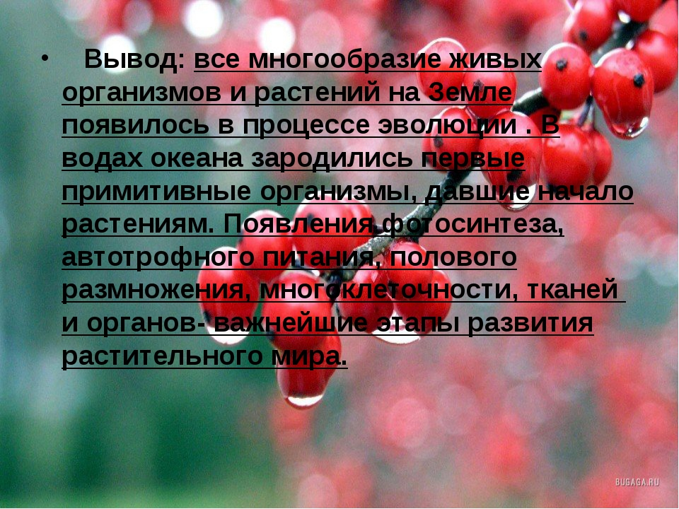 Вывод:все многообразие живых организмов и растений на Земле появилось в п...