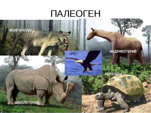 ПАЛЕОГЕН МОНГОЛОНИКС ЭМБОЛОТЕРИЙ ИНДРИКОТЕРИЙ ЧЕРЕПАХА ОРЁЛ