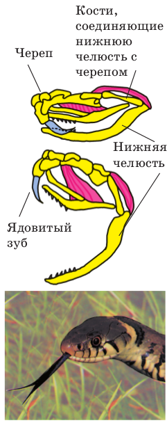 http://blgy.ru/images/biology7/pic257.png