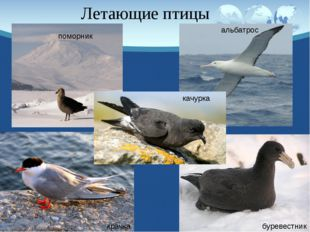 Задание на дом: Стр. 95 – 97 Устно подготовить рассказ о пингвинах.
