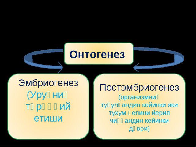 Онтогенез-организмларниң йәккә тәрәққий етиши.