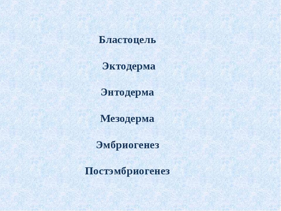 Бластоцель Эктодерма Энтодерма Мезодерма Эмбриогенез Постэмбриогенез