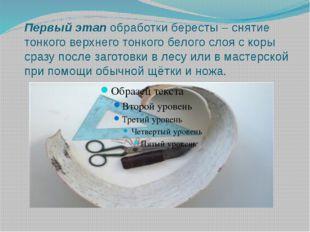 Первый этап обработки бересты – снятие тонкого верхнего тонкого белого слоя с