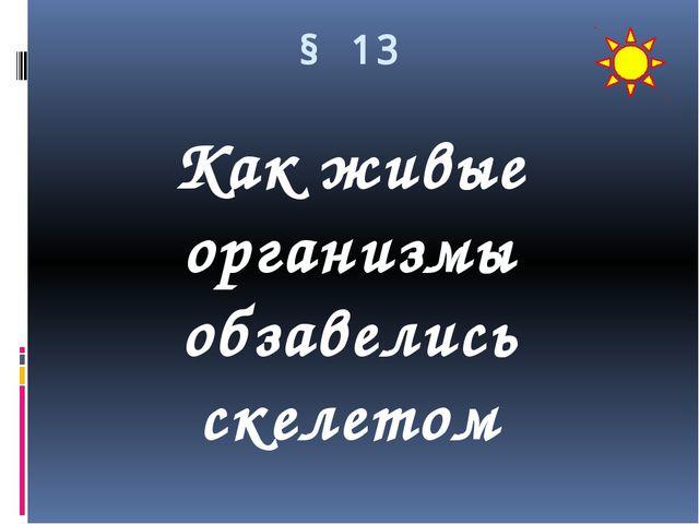 § 13 Как живые организмы обзавелись скелетом
