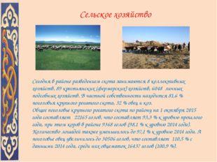 Сельское хозяйство Сегодня в районе разведением скота занимаются 8 коллективн