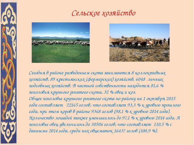 Сельское хозяйство Сегодня в районе разведением скота занимаются 8 коллективн...