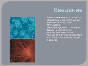 Введение Стволовые клетки – это клетки, обладающие неограниченным или с весьм