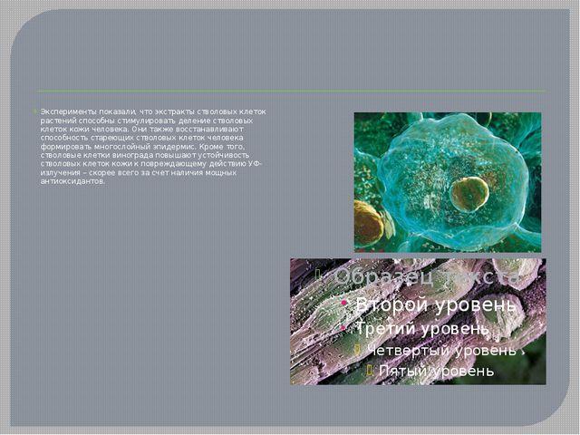 Эксперименты показали, что экстракты стволовых клеток растений способны стим...