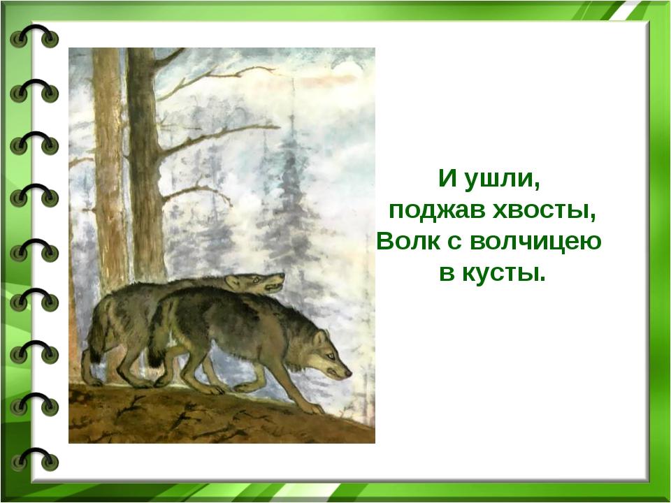И ушли, поджав хвосты, Волк с волчицею в кусты.