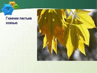 Гниение листьев осенью
