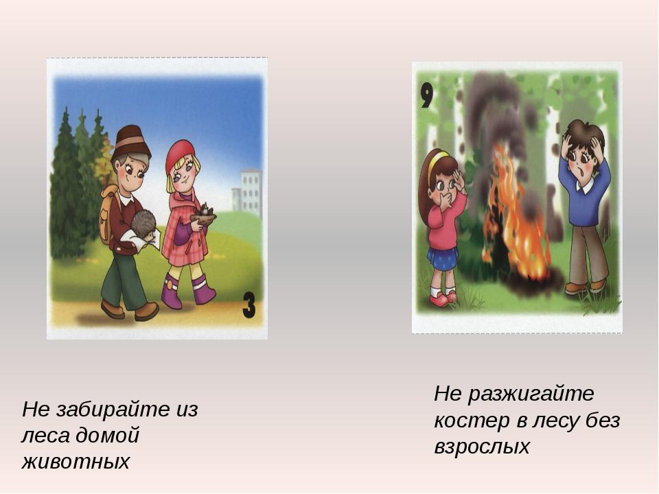Не забирайте из леса домой животных Не разжигайте костер в лесу без взрослых