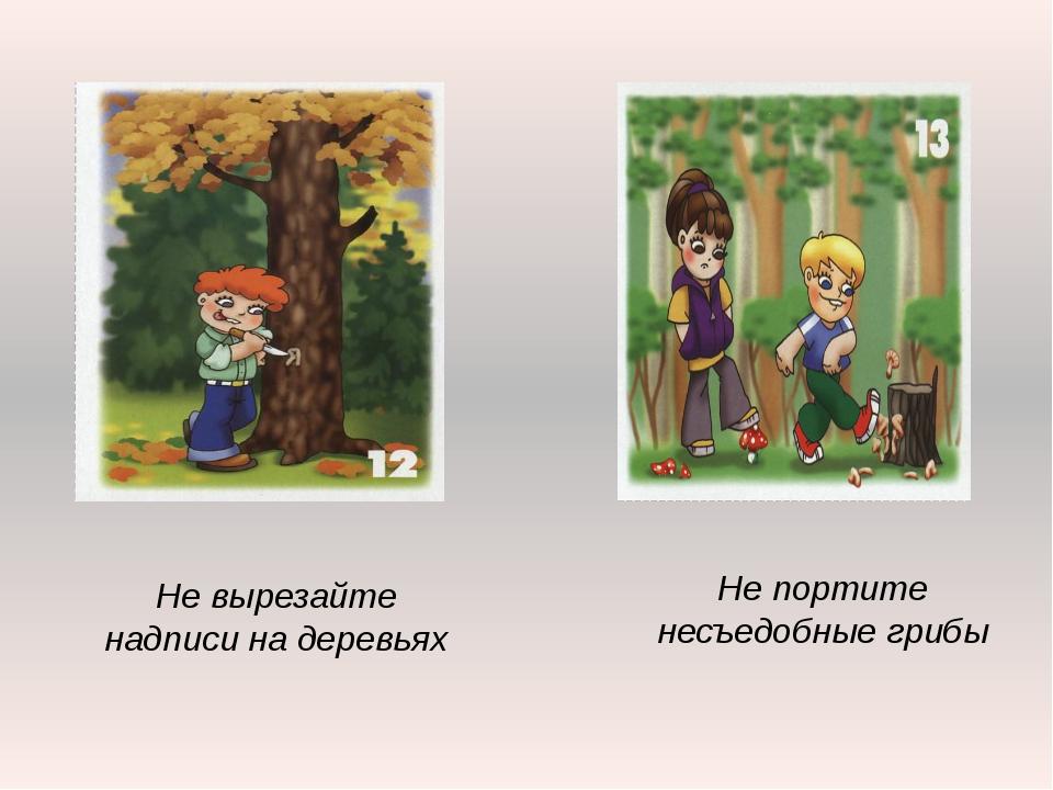 Не портите несъедобные грибы Не вырезайте надписи на деревьях