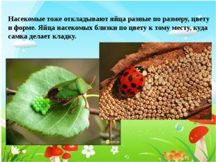 Насекомые тоже откладывают яйца разные по размеру, цвету и форме. Яйца насеко