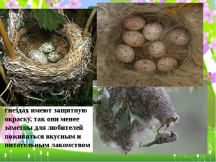 Чаще всего, яйца в открытых гнездах имеют защитную окраску, так они менее зам